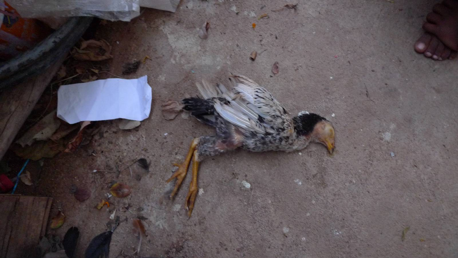 """""""Ten of our chickens have died so we are facing a money problem""""  Photograph by Leema Rosy"""