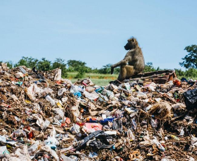 Victoria Falls Landfill, Zimbabwe. 2016 © Alexander Mourant