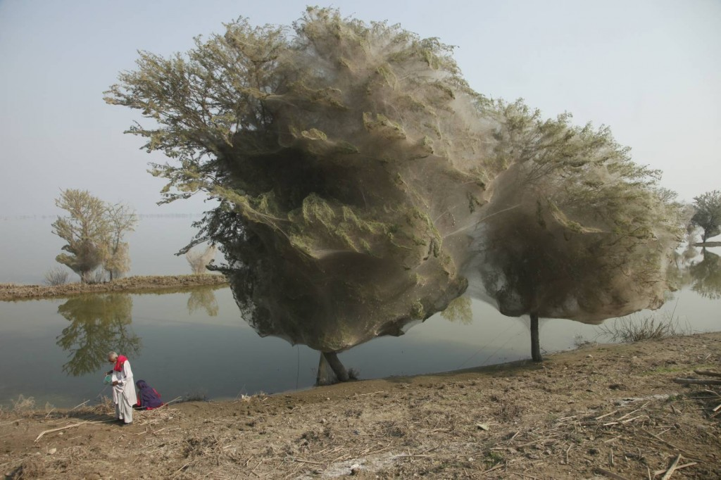 """© Russell Watkins 