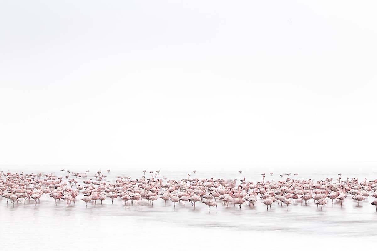 'Flamingo's Soul' by Meniconzi Alessandra, Switzerland, Winner, Open, Wildlife, 2017 Sony World Photography Awards